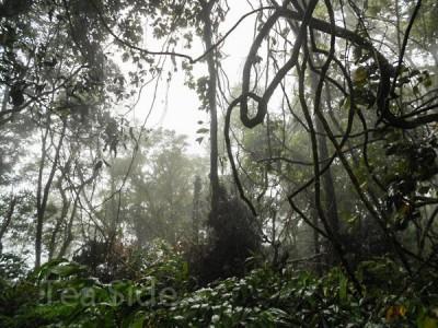 Чайная экспедиция. В поисках старых чайных деревьев. Часть 3