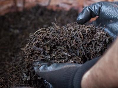 Craft ripe pu-erh. Interview with Tea Mail