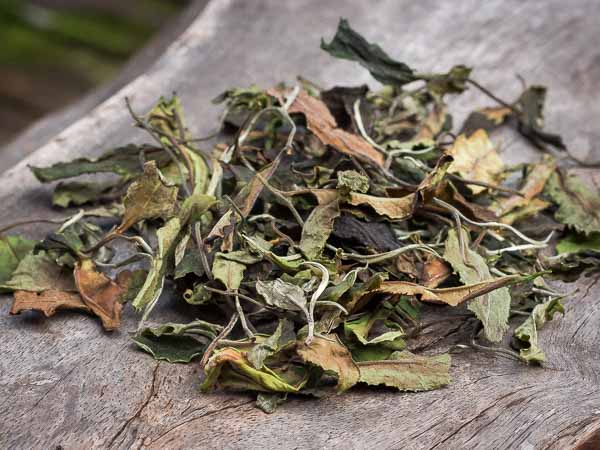 Let's talk about white tea