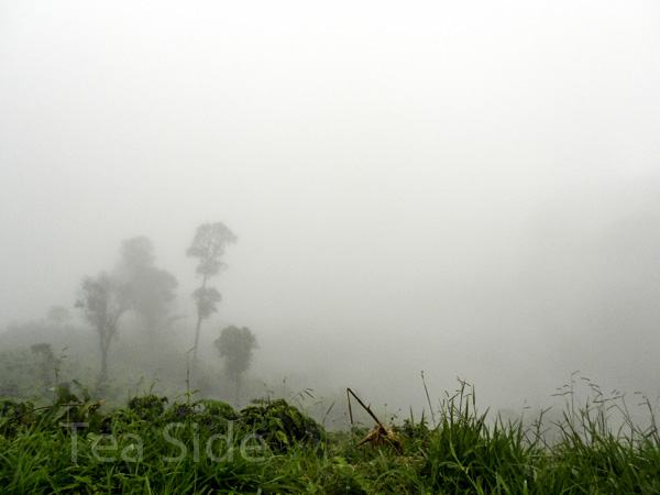 Misty jungle view, Northern Thailand
