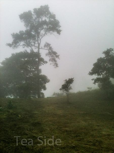 Misty jungle view 2