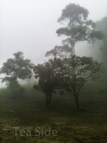 Misty jungle view 1