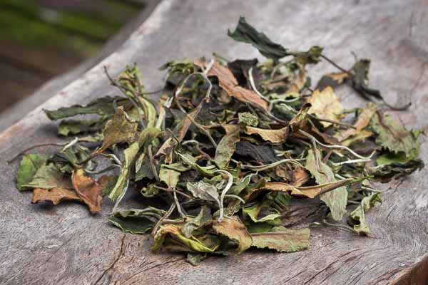 Tea herbarium from Moonlight White tea
